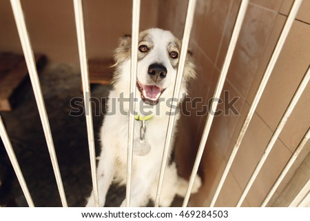 Big yellow dog shelter belt posing stock photo 476341594 shutterstock - Dogs for small spaces concept ...
