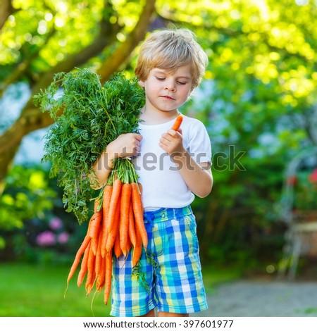 cute preschool blond little kid boy with carrots in domestic garden child gardening and eating