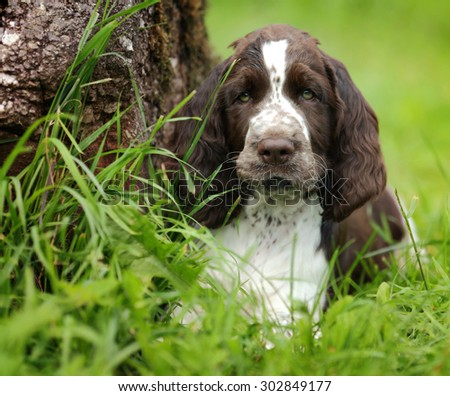 Cute puppy hiding in the grass