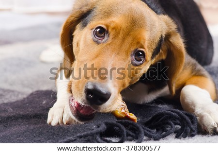 Cute Puppy on a cozy Blanket. Selective focus