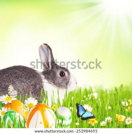 Cute rabbit in grass with coloured eggs, Free space for text