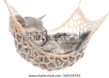 Cute striated kitten sleeping in hammock on a white background.