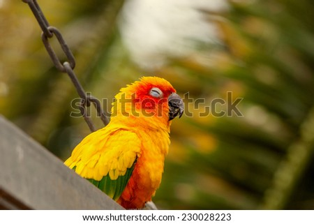 Cute Sun Conure parrot on a playground