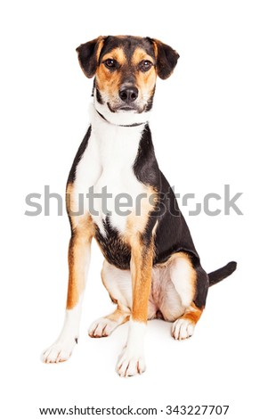 Cute young obedient mixed breed puppy dog sitting over white