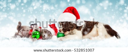Cute young puppy wearing Christmas Santa Claus hat playing with green ornament