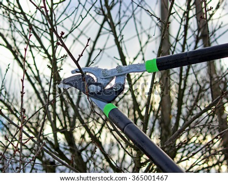 Cutting tree. Pruning shears