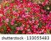 Daisy flower - Spring flower field - stock photo