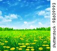 Dandelion field and bright blue sky. - stock photo