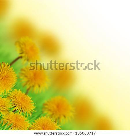 Dandelions in the grass on the white background