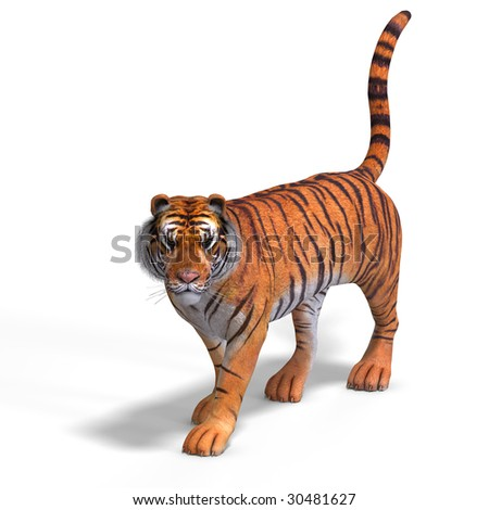 Dangerous Big Cat Tiger With Clipping Path Over White