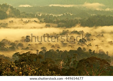 Danum Valley Conservation Area, Sabah - Borneo, Malaysia