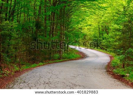 Dark forest road in Plitvice national park-Croatia