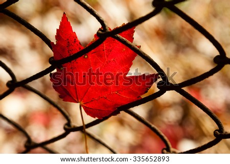 Daytime scene of leaves in a fence during the autumn season