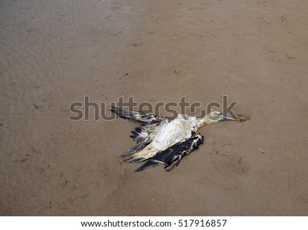 dead bird on the beach