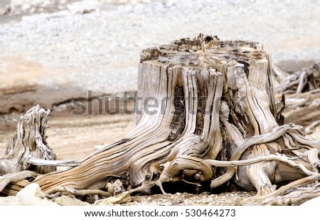 dead tree trunks and roots at a lake
