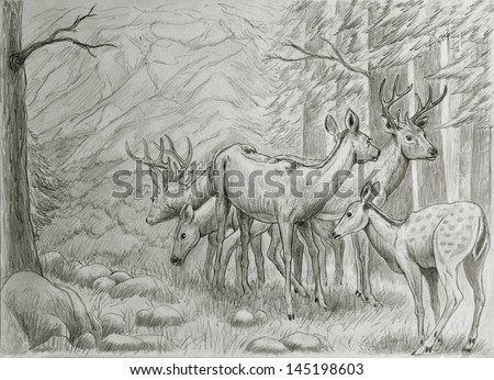 deers family resting in mountain forest