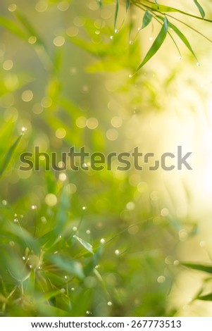 Defocused Bokeh, twinkling lights green and yellow blurred bokeh abstract light spring forest background. Natural bokeh from bamboo leaf. Blur picture style.