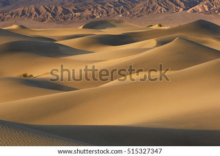 Desert landscape of the Mesquite Flat Sand Dunes, Death Valley National Park, California, USA