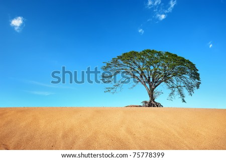 desert with big tree in blue sky