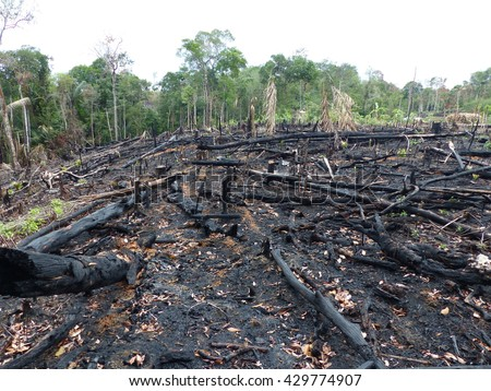 Destroyed tropical rainforest in Amazonia. Image taken on 2th February 2016