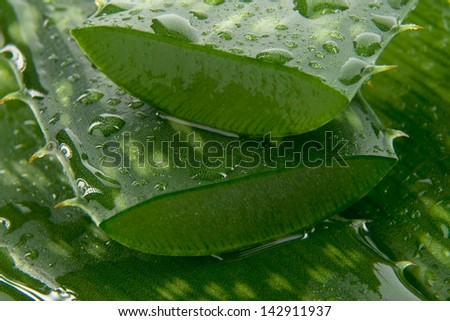 Detail leafs aloe vera with drop of water