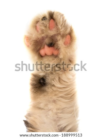 Detail of a cat paw, photo isolated on a white background.