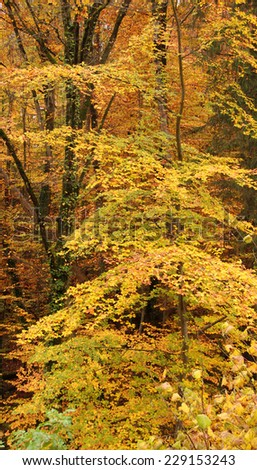 detail of a colorful forest at autumn time in Southern Germany