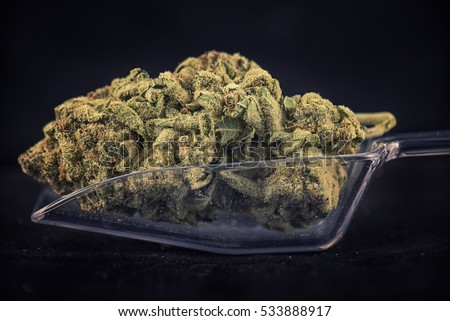 Detail of dried cannabis bud (nuken strain) in clear scooper isolated on black background - medical marijuana concept