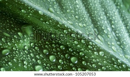 detail of drops on green leaf background