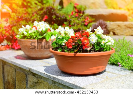 Detail of flower pot in garden in summer time. Summer background. Background with sunshine.