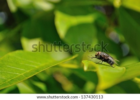 Detail view of house fly sitting on green leaf