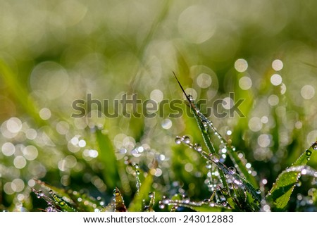 Dew on the grass looks beautiful and wonderful