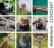 Different animals collage with nine photos - stock photo