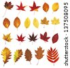 different autumn leaves - stock photo