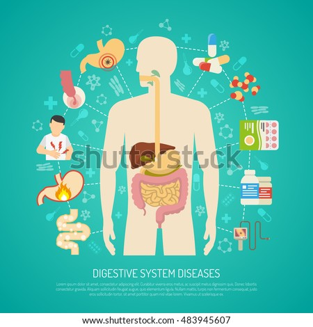 digestive system diseases human body on stock vector 377775049, Muscles