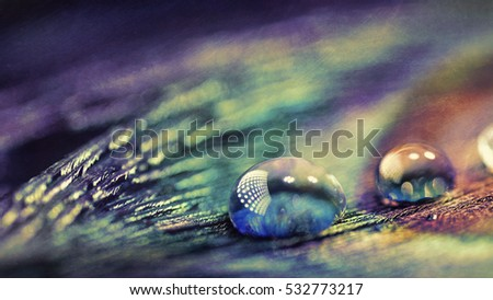 Digital art, artistic textured composition of Water drops on peacock feather