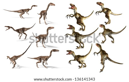 dinosaurs collection. Coelophysis and Velociraptor
