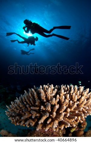 Divers above coral reef