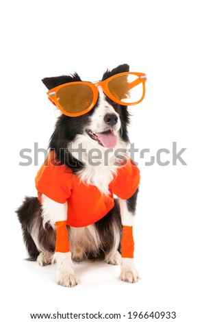 Dog as Dutch soccer fan isolated over white background