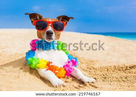dog at the beach with a flower chain at the ocean shore wearing sunglasses