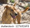 Dog in cage at the animal shelter. Focus on lattice - stock photo