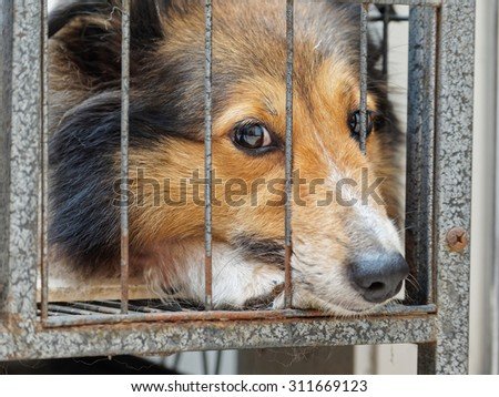 Dog in cage, unhappy face with nose stick out