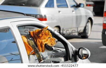 dog in the car on the front seat