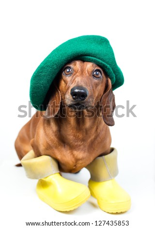 Dog in yellow boots and green hat