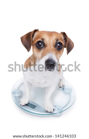 Dog measures your weight, sits on the scales and looks into the camera