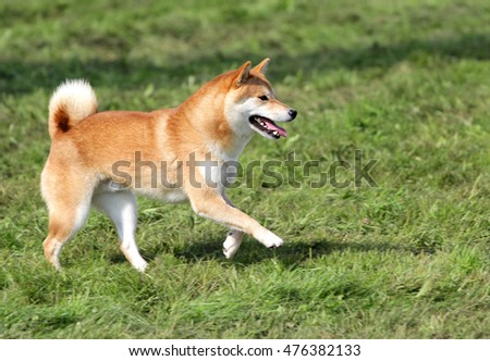 Red Dog  Happing