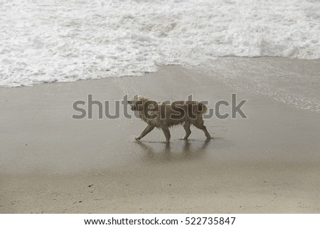 Dog on beach playing and walking, animals and nature