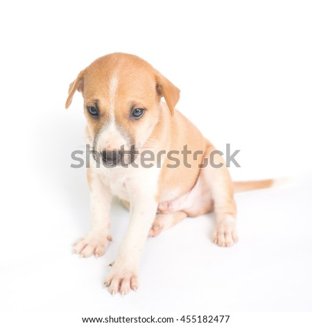 dog puppy on the white background