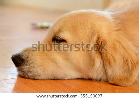 dog sleeping and eating
