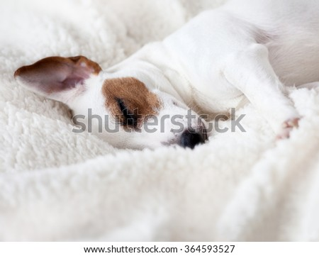 Dog Sleeping In Bed Sign Of Trust